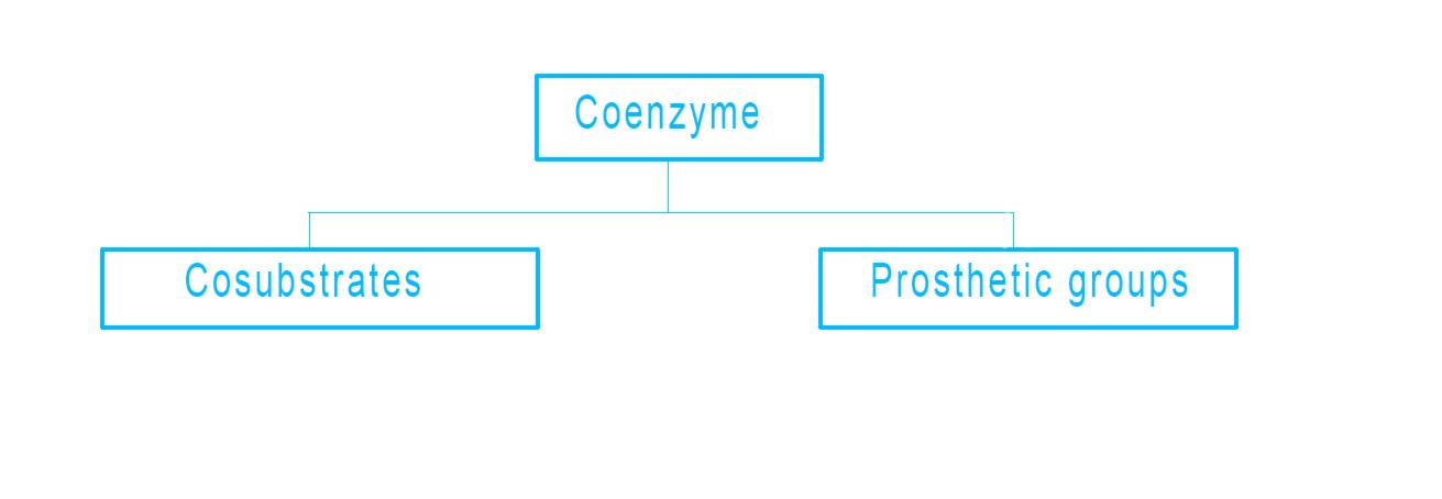 coenzyme and cofactor