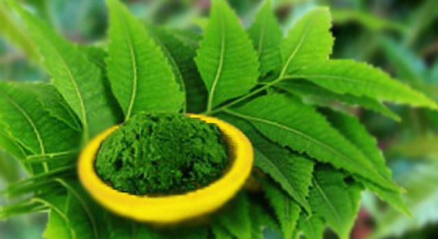 http://pharmaeducation.net/medicinal-uses-of-neem-azadirachta-indica