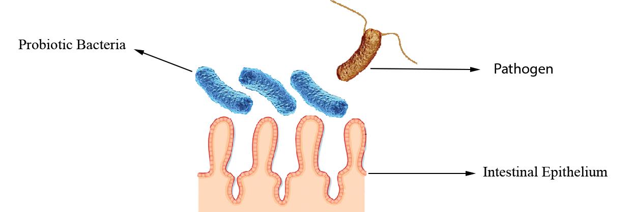 Probiotics Blocking of Adhesion Sites