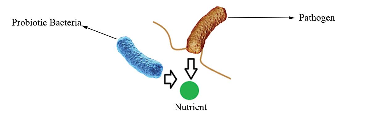 Probiotics Competition for nutrition