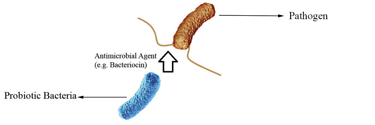 Probiotics Direct Antagonisms