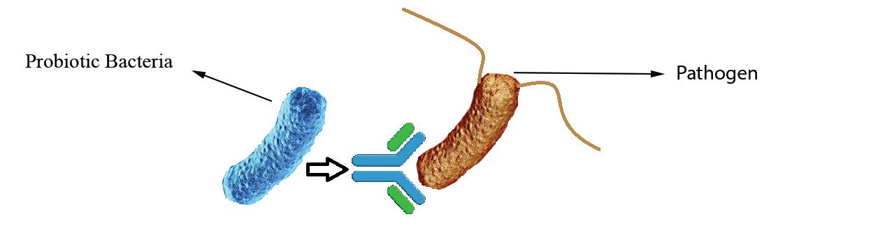 Probiotics Immune Stimulation